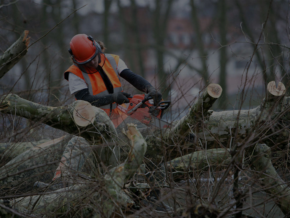 Brentwood Tree Service
